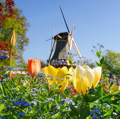 De mooiste marathons in Nederland